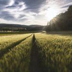 Skuteczne zwalczanie herbicydów