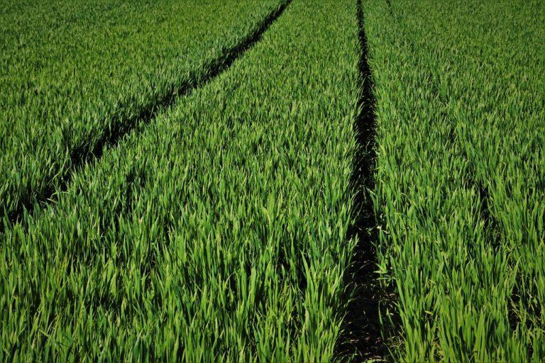 Jak powinno być realizowane zwalczanie chorób roślin?