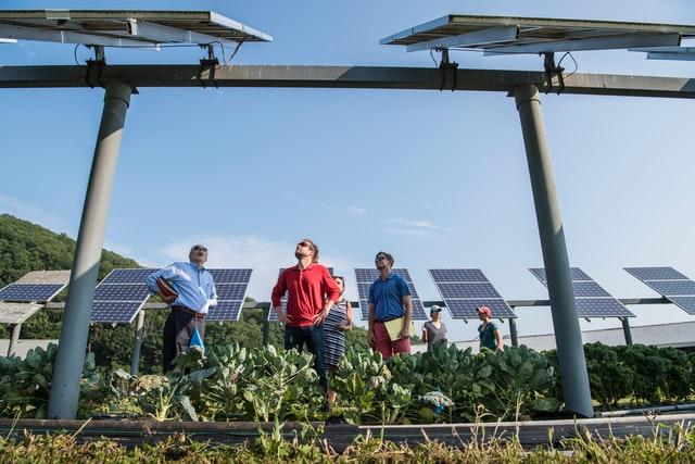 Produkcja paneli słonecznych to wiele wyzwań technologicznych