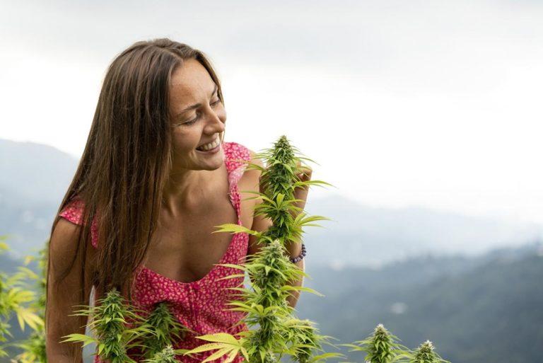 Dlaczego nie zacząć uprawiać marihuany w odmianie mazar?